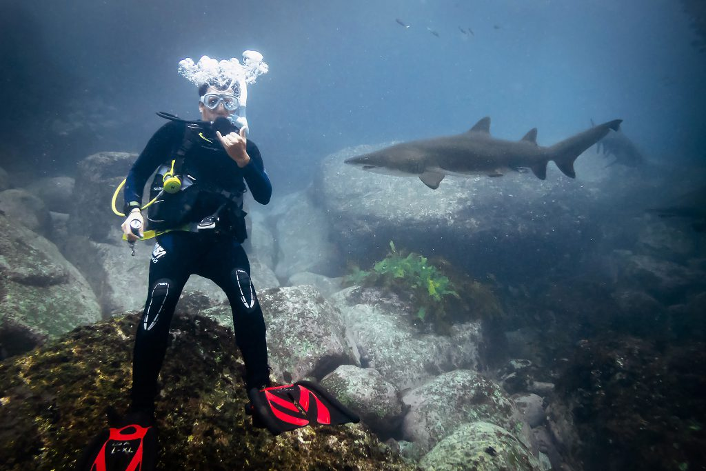 Warren diving with ragged-tooth sharks