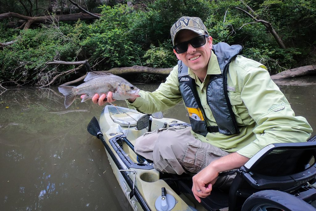 An Aussie bass caught on fly in the Lane Cove River
