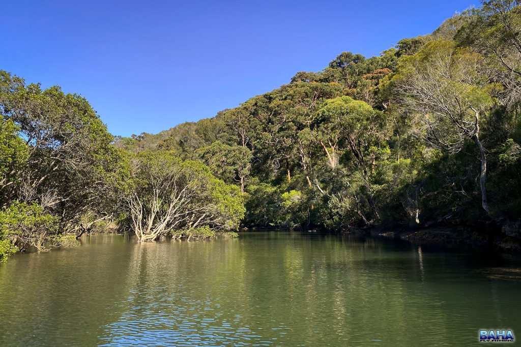 Small mangroves hidden in Middle Harbour
