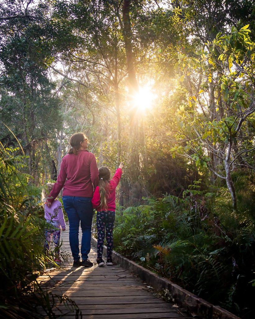 Looking for koalas on the Tilligerry Creek Koala Walk
