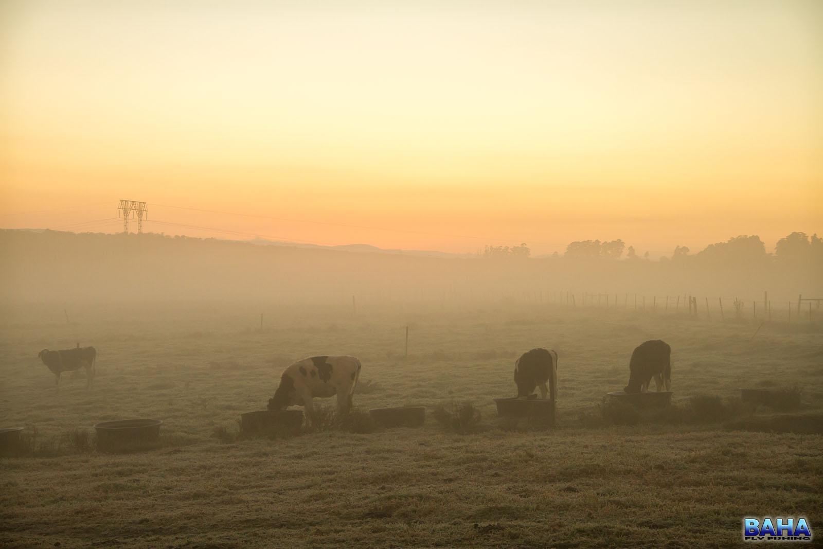 Sunrise on Virginia Farm